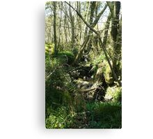 Co. Waterford Ireland Canvas Print