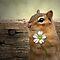7th of June - Small Mammals