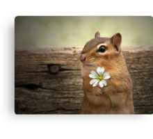 WELCOME SPRING! Canvas Print