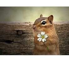 WELCOME SPRING! Photographic Print