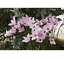 Singing Lilies Photographic Print