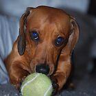 Minature sausage dog by TaylorV