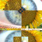 Suns Eye by gfinchina