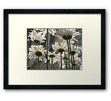 Daisy Umbrella Framed Print