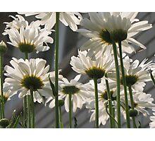 Daisy Umbrella Photographic Print