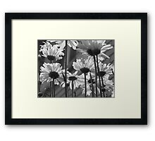 Daisy Umbrella black and white Framed Print
