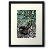 A Log in A Brush Framed Print