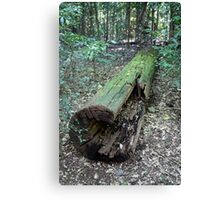 A Log in A Brush Canvas Print