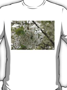 Springtime Dreams - Masses of White Blossoms T-Shirt