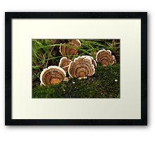 Waving fungi Framed Print