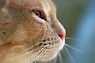 Watchful by Renee Hubbard Fine Art Photography