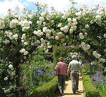 Rose garden, Mottisfont Abbey, Hampshire, southern England (2) by Philip Mitchell