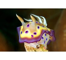 Kunes Chromodoris (Nudibranch) Photographic Print