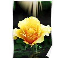 Yellow Frill Poster