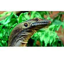 Mertens Water Monitor Photographic Print