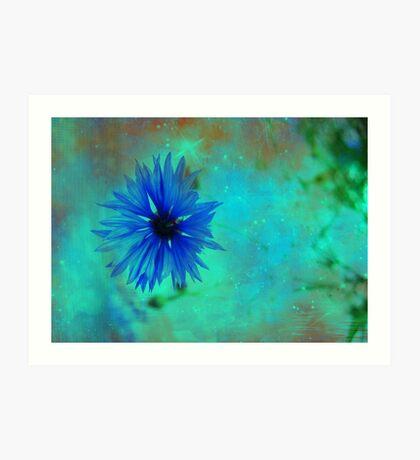 Bleuet des champs Art Print