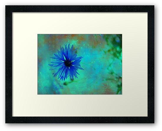 Bleuet des champs by Caterpillar