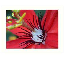 Passiflora III Art Print