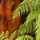 Ferns on show by Michael Matthews