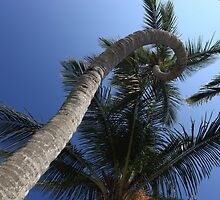 twisted palm by kathy s gillentine