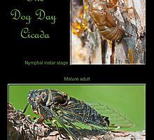The Dog Day Cicada by DigitallyStill