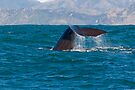 Whale Diving 3 by Werner Padarin