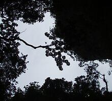 World Above - Phuket by Matthew Lane
