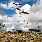 Seagulls by the sea by Joslin Hartley