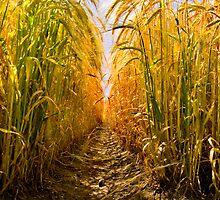 Barley-High by Geoff Carpenter