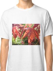 Rebirth, Spring growth in my Garden, Tumut, Australia. Classic T-Shirt