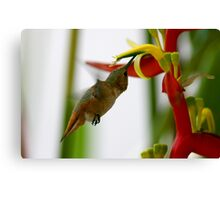 Humming Heliconias Canvas Print