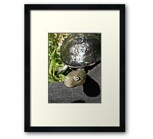 Tommy Turtle Framed Print