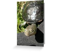 Tommy Turtle Greeting Card