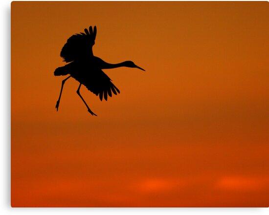 Walking on Air by William C. Gladish