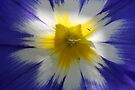 Backlit Flower by Adam Bykowski