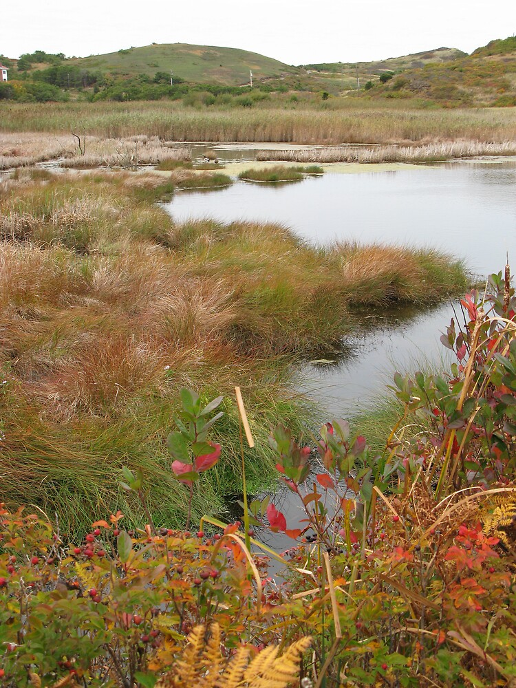 Ballston Beach Marsh by dylangould