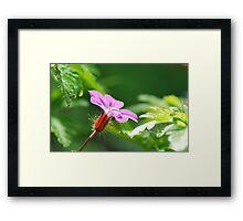 Purple Drop Framed Print