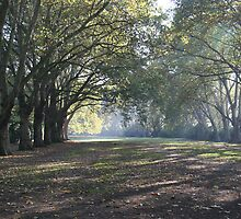 Bishop's Park in the Fall by arushton