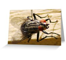 Bug-eyed Greeting Card