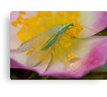 Green Insect Canvas Print