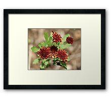 Rasberry  Delight Framed Print