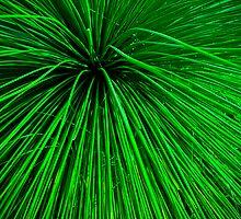 Botanique Big Bang by tazee