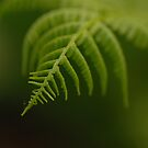 Fern Leaf by Annie Lemay  Photography