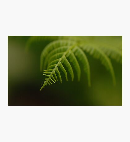 Fern Leaf Photographic Print