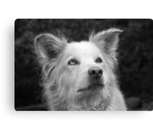 Nanook the Dog in Black and White Canvas Print