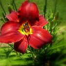 Red and Yellow Flower by Landscapes Mainly .