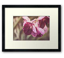 Dream Flower 32 Framed Print