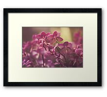 Dream Flower 33 Framed Print