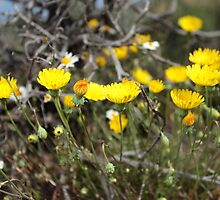 High Desert wild Flowers 2 by SB  Sullivan