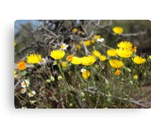 High Desert wild Flowers 2 Canvas Print